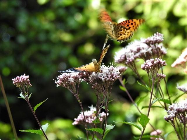 花と蝶~♪_f0354923_21323005.jpg