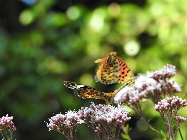 花と蝶~♪_f0354923_21332513.jpg