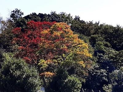 いつもの里山公園で_f0129726_19123536.jpg