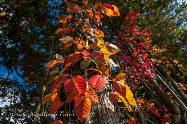 秋の撮影ツアー第2弾_b0173137_05311528.jpg