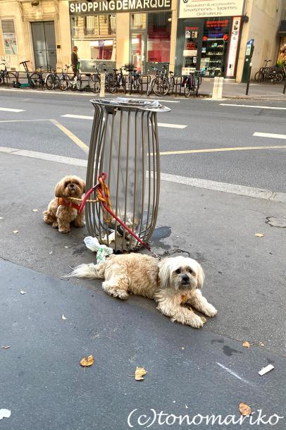パリの治安が悪化しているのを感じます_c0024345_22391112.jpg