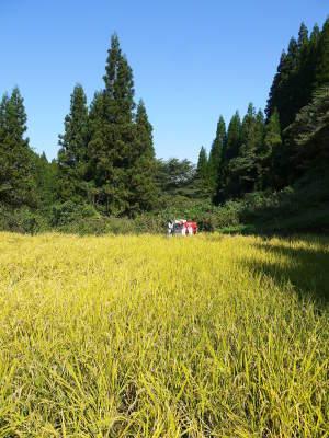 米作りの挑戦(2020) 稲刈りの様子!今年の問題点と来年へむけての課題!(後編)_a0254656_16245804.jpg