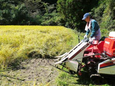 米作りの挑戦(2020) 稲刈りの様子!今年の問題点と来年へむけての課題!(後編)_a0254656_17051336.jpg