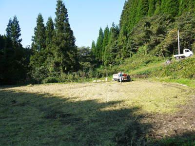 米作りの挑戦(2020) 稲刈りの様子!今年の問題点と来年へむけての課題!(後編)_a0254656_17345243.jpg