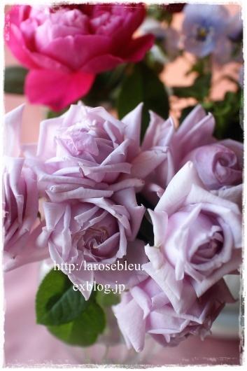 薔薇とビオラと_f0338156_20132758.jpg