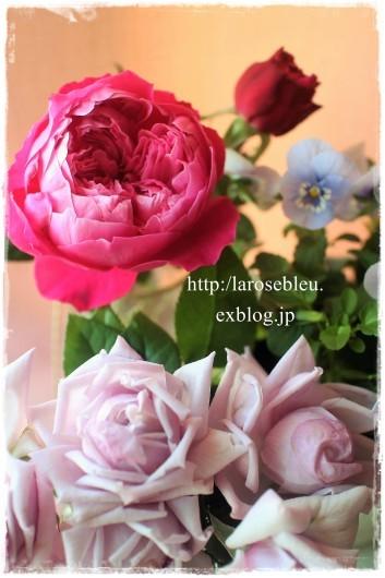 薔薇とビオラと_f0338156_20174058.jpg