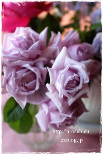 薔薇とビオラと_f0338156_20250566.jpg