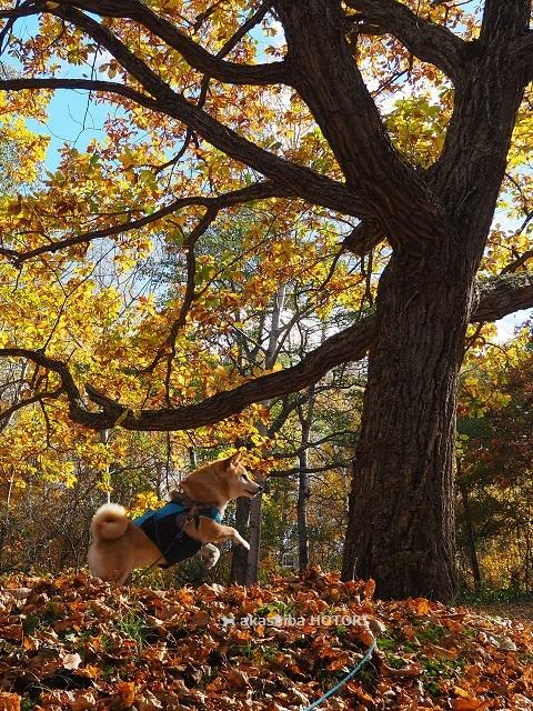 ところ遺跡の森 2020.10_f0150377_15091235.jpg