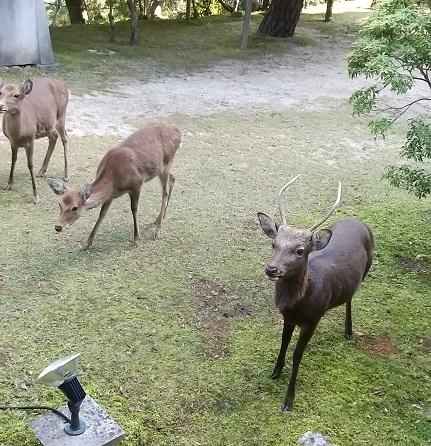 奈良ホテル_d0043390_23271117.jpg