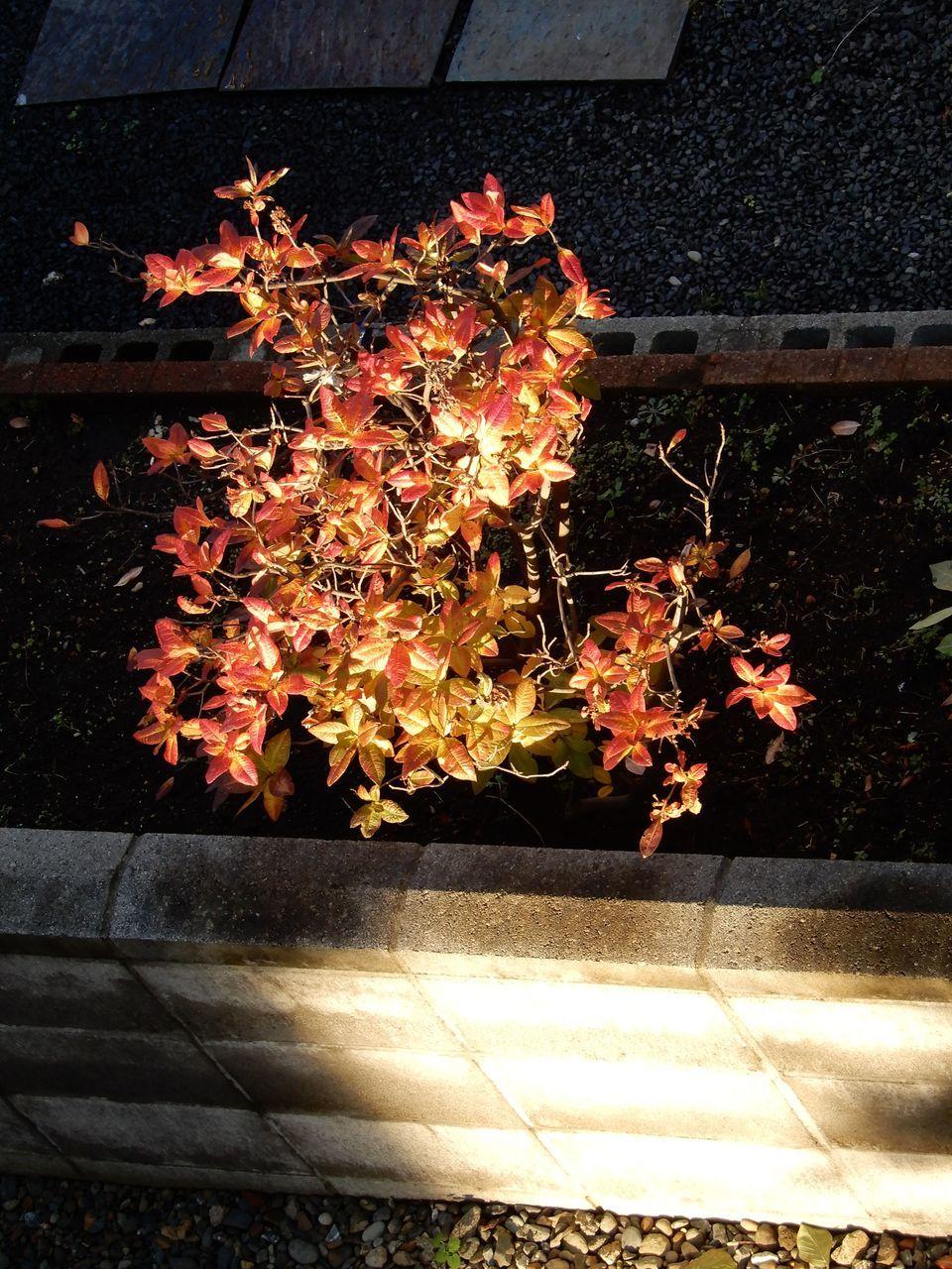 我が家の周辺はこの秋最低の気温_c0025115_21180479.jpg