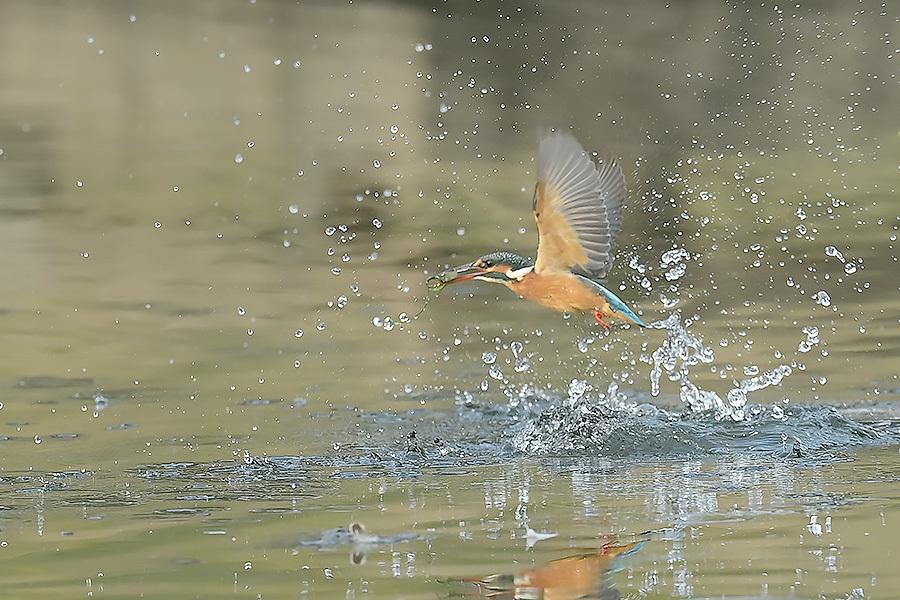 201028 池の若雌出悪し、帰り掛け川に_c0278820_14553678.jpg