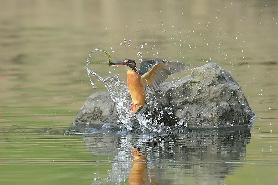 201028 池の若雌出悪し、帰り掛け川に_c0278820_15024873.jpg