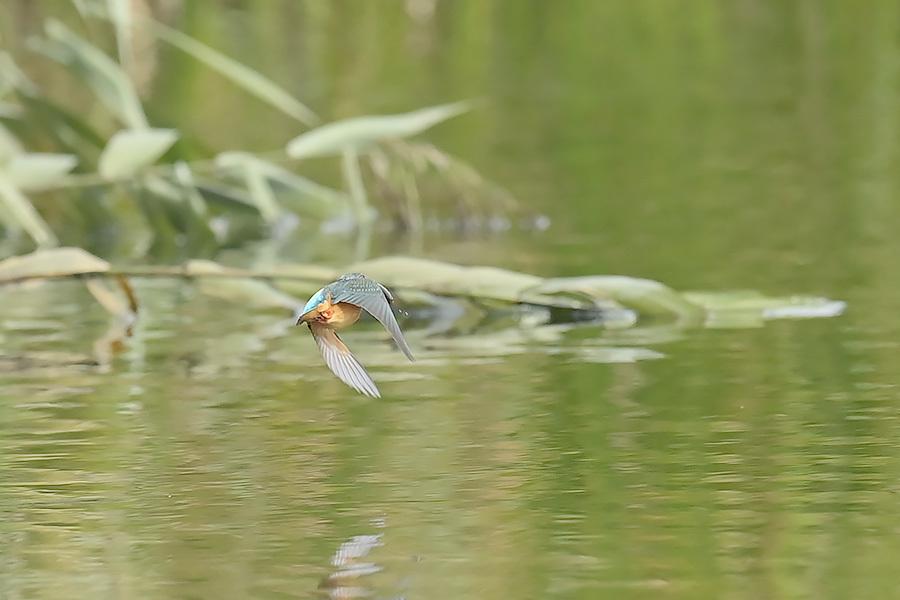 201028 池の若雌出悪し、帰り掛け川に_c0278820_15214470.jpg