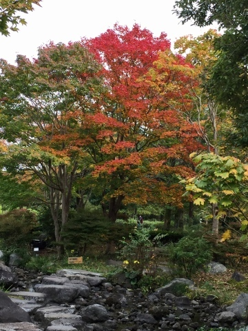 昭和記念公園のコスモス_f0002533_19483719.jpeg