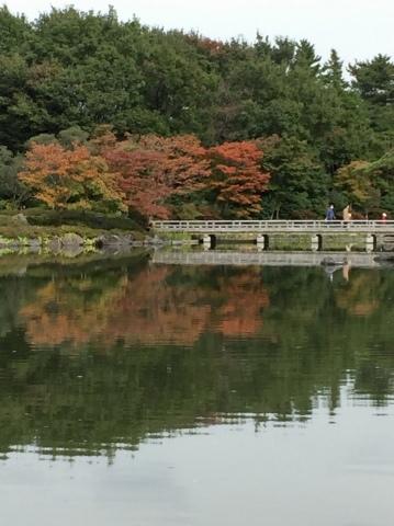昭和記念公園のコスモス_f0002533_19491471.jpeg
