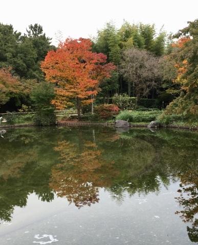 昭和記念公園のコスモス_f0002533_19495066.jpeg