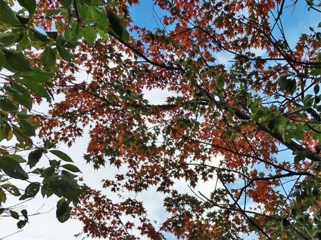 紅葉の大万木山①_f0214649_19393602.jpg