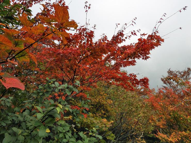 紅葉の大万木山①_f0214649_19403270.jpg