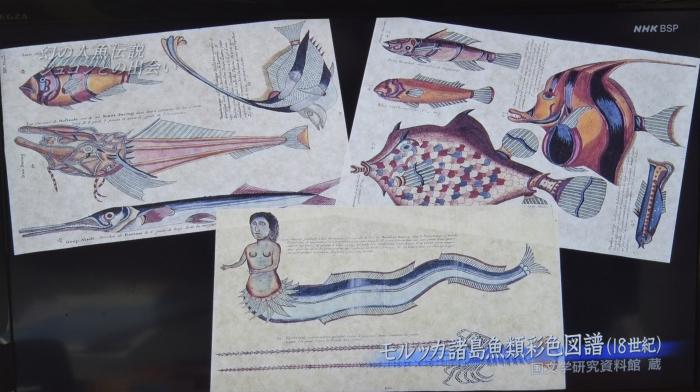 人魚伝説1._f0103459_10525100.jpg