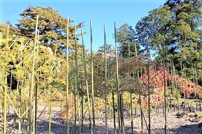 弘前城植物園菊の展示_2020.10.28撮影_d0131668_13422940.jpg
