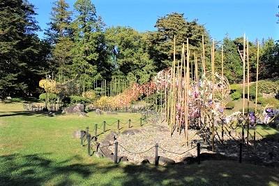 弘前城植物園菊の展示_2020.10.28撮影_d0131668_13430741.jpg