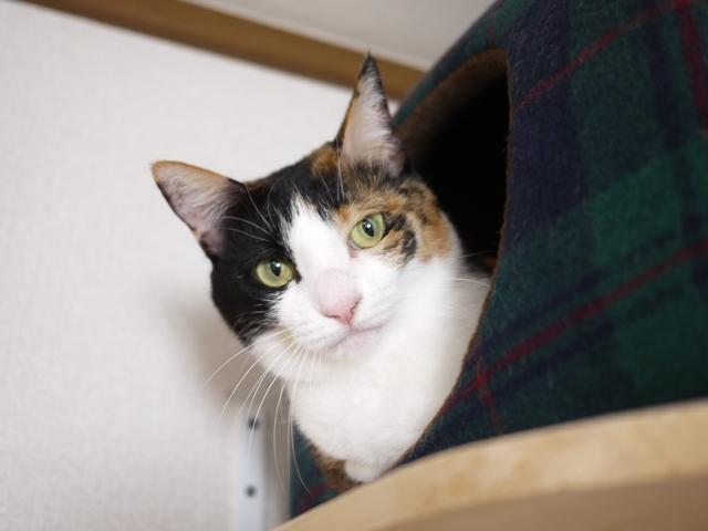 猫のお留守番 みーたんちゃん編。_a0143140_20130487.jpg