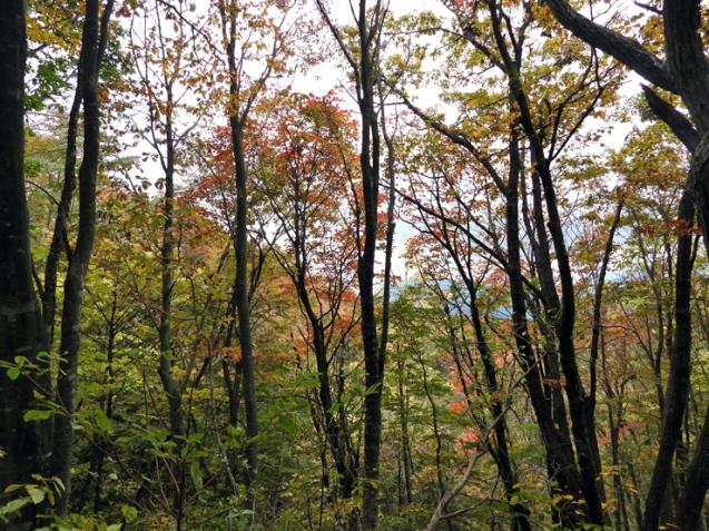 紅葉の大万木山①_f0214649_03302222.jpg