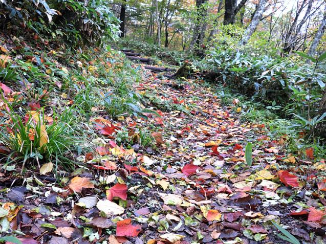 紅葉の大万木山①_f0214649_03305329.jpg