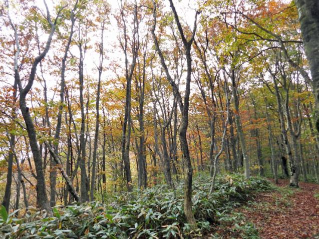 紅葉の大万木山①_f0214649_03311780.jpg