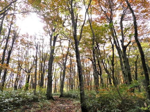 紅葉の大万木山①_f0214649_03313827.jpg