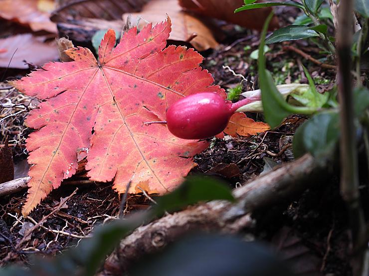 紅葉の大万木山①_f0214649_03471397.jpg