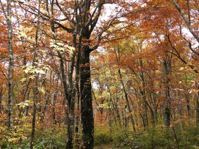 紅葉の大万木山①_f0214649_03484748.jpg