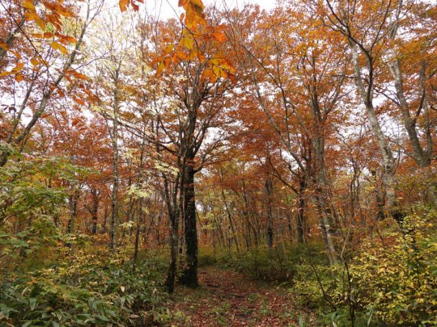 紅葉の大万木山①_f0214649_03500201.jpg