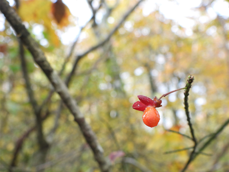 紅葉の大万木山①_f0214649_03503281.jpg