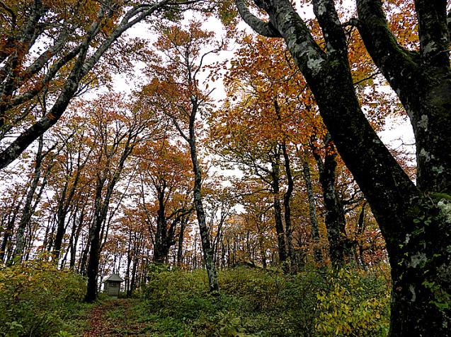 紅葉の大万木山①_f0214649_03570033.jpg