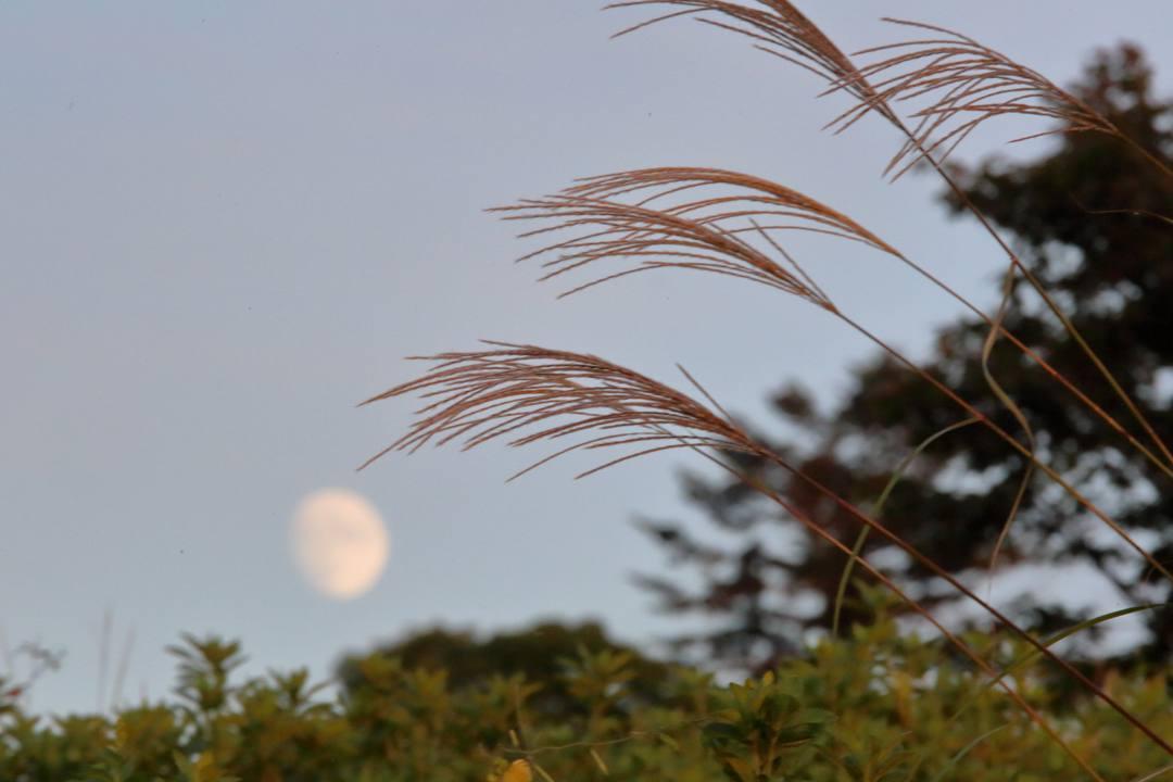月と夕陽とススキ_e0403850_22360250.jpg
