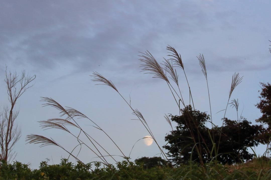月と夕陽とススキ_e0403850_22360734.jpg