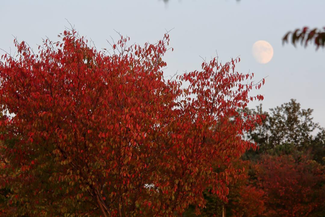月と夕陽とススキ_e0403850_22361772.jpg