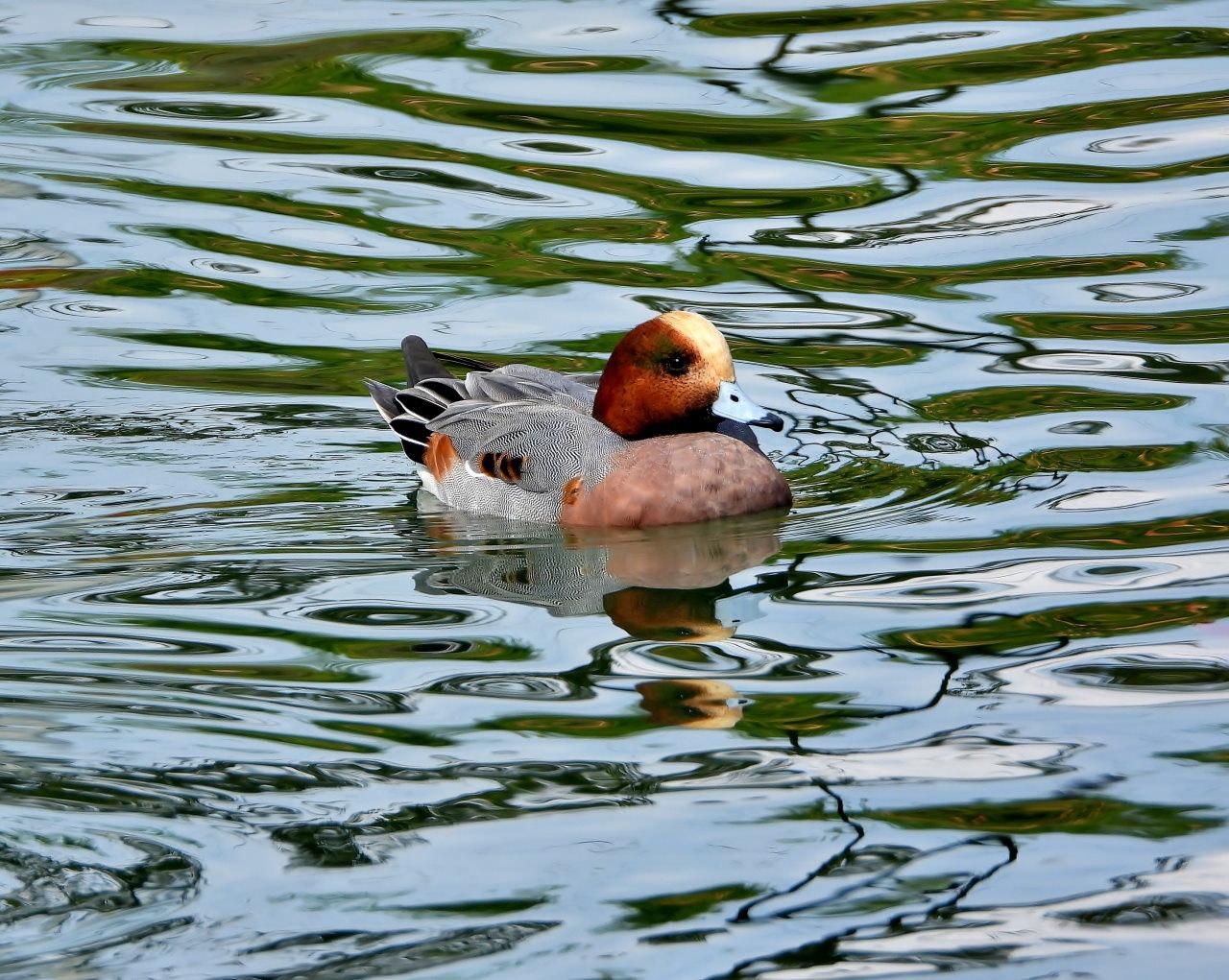 三ツ寺公園の鳥さんたち_c0305565_17244255.jpg