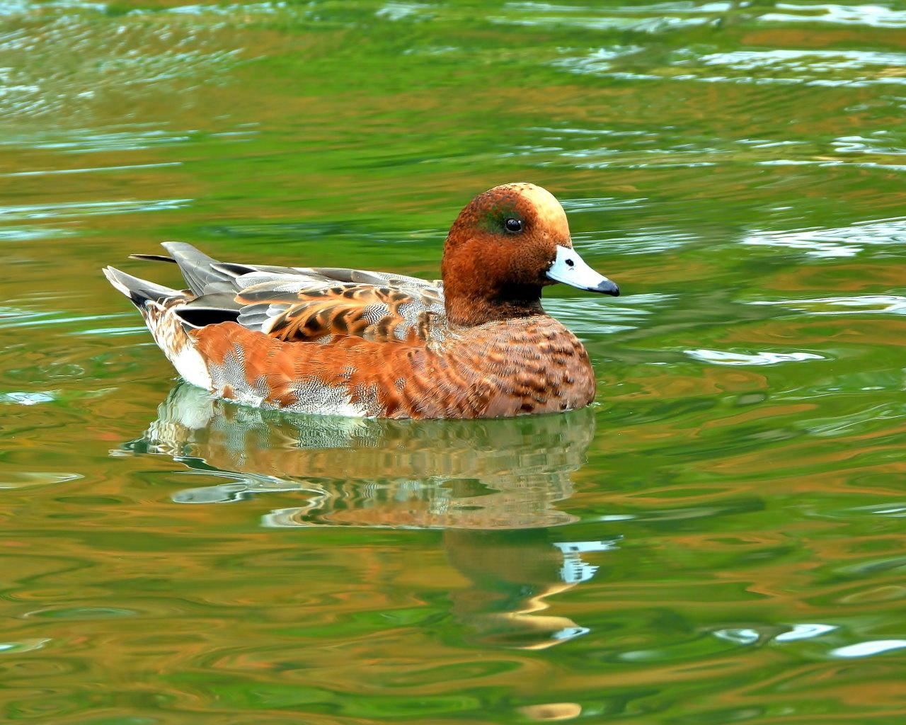 三ツ寺公園の鳥さんたち_c0305565_17254885.jpg