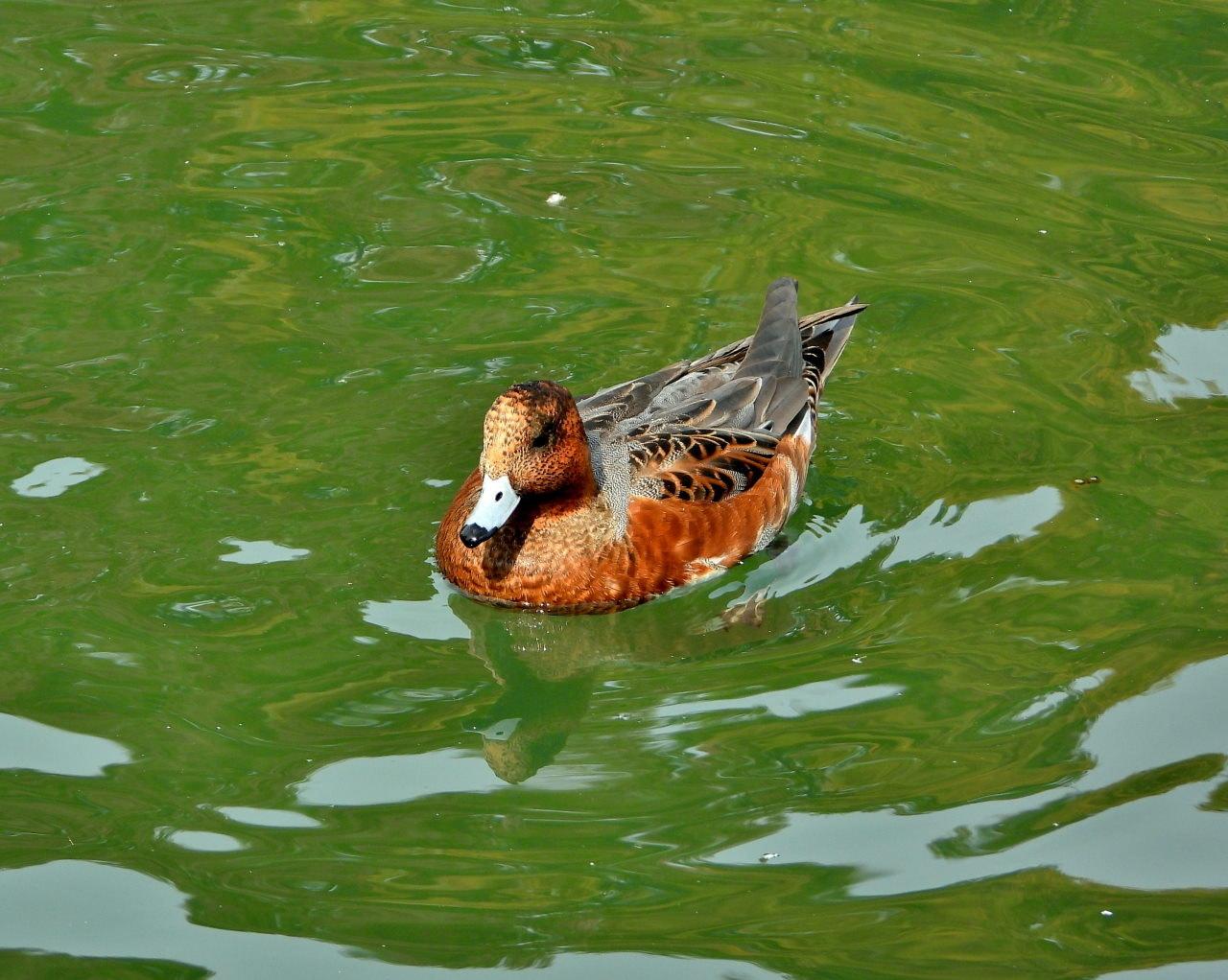 三ツ寺公園の鳥さんたち_c0305565_17260760.jpg