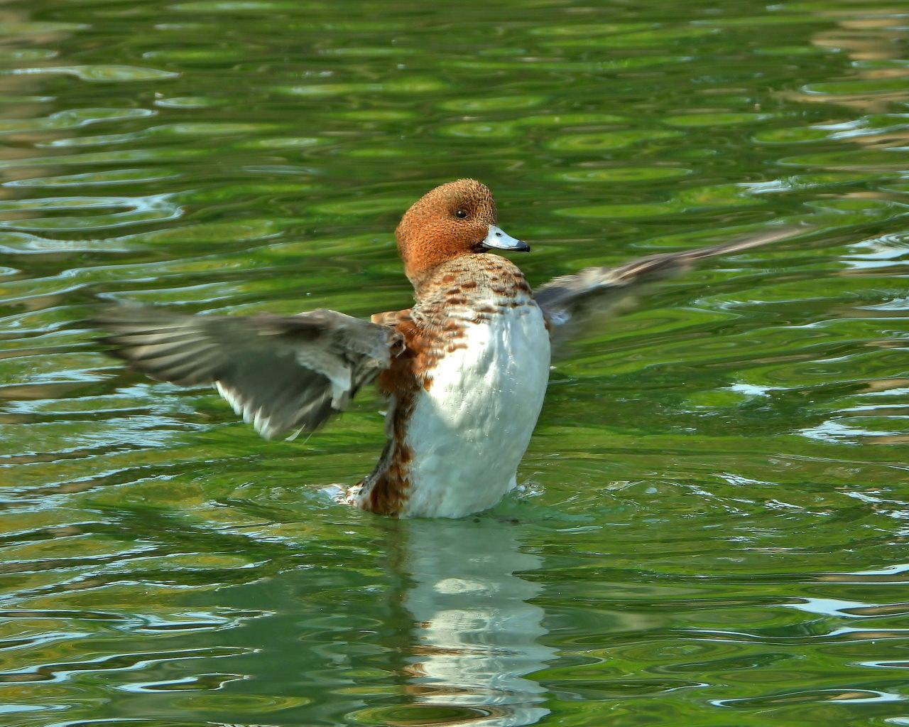 三ツ寺公園の鳥さんたち_c0305565_17265260.jpg