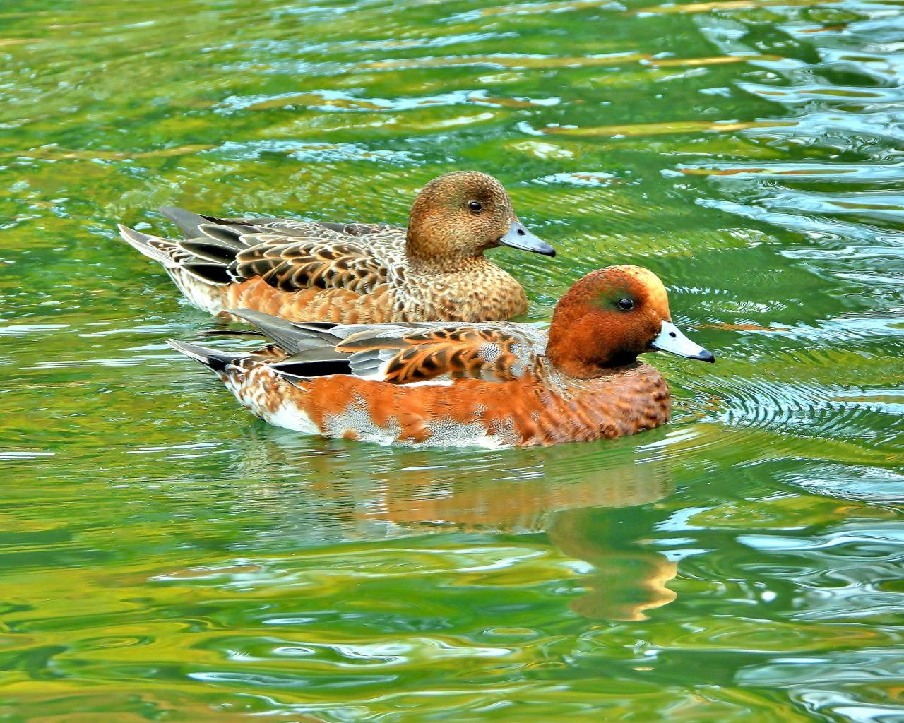 三ツ寺公園の鳥さんたち_c0305565_17270714.jpg