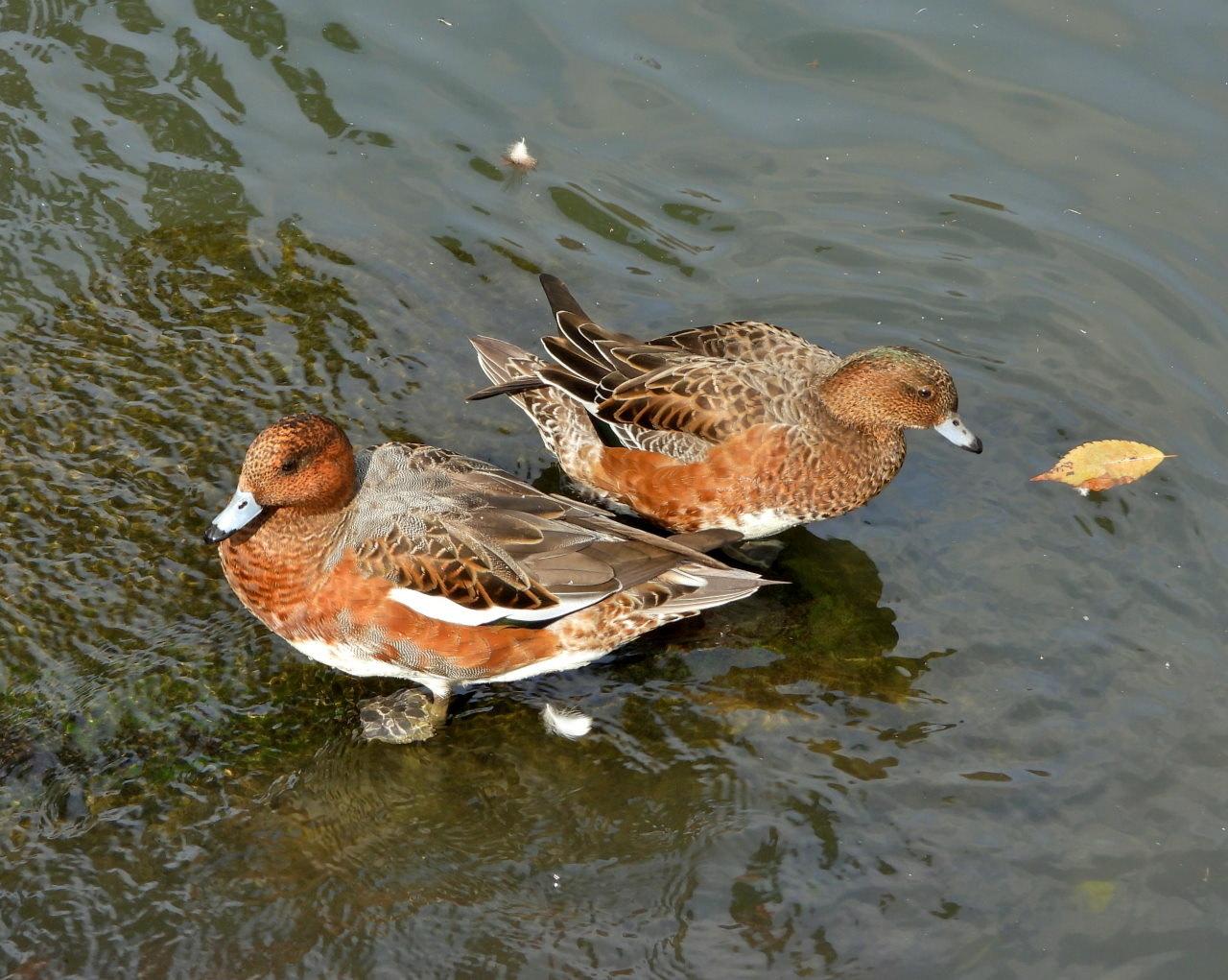 三ツ寺公園の鳥さんたち_c0305565_17272015.jpg