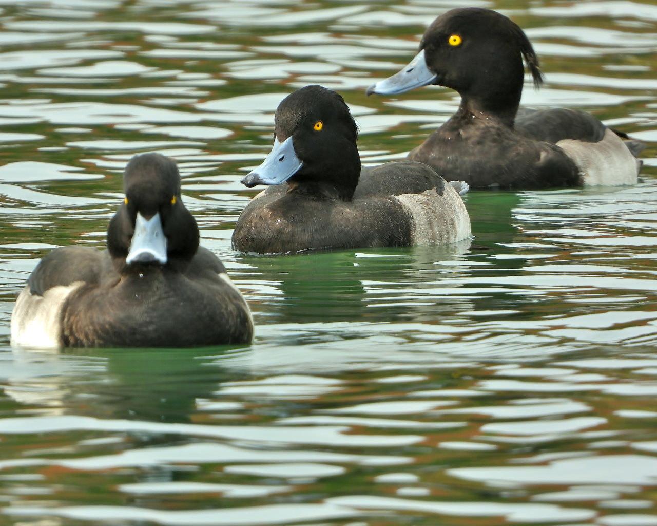 三ツ寺公園の鳥さんたち_c0305565_17282836.jpg