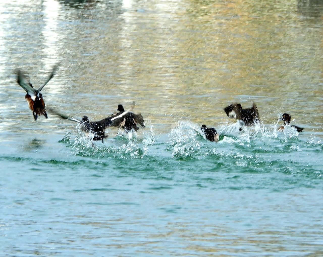 三ツ寺公園の鳥さんたち_c0305565_17291724.jpg