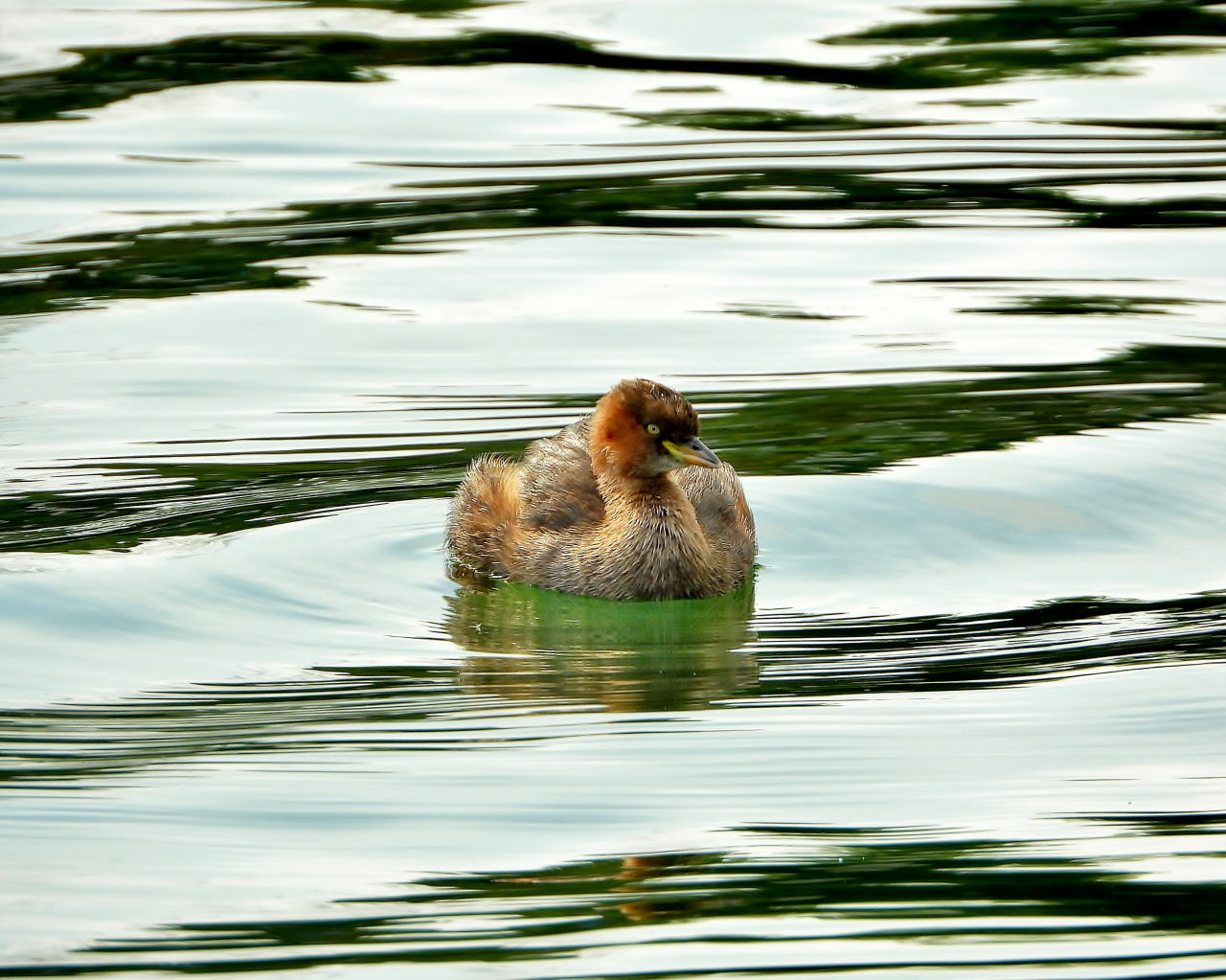 三ツ寺公園の鳥さんたち_c0305565_17294549.jpg