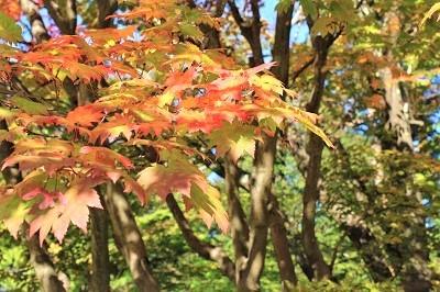 弘前公園を秋さんぽ_2020.10.28撮影_d0131668_11562216.jpg