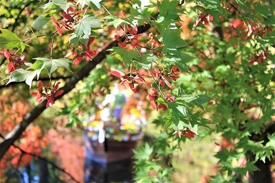 弘前公園を秋さんぽ_2020.10.28撮影_d0131668_11581515.jpg