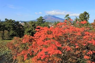 弘前公園を秋さんぽ_2020.10.28撮影_d0131668_12010116.jpg